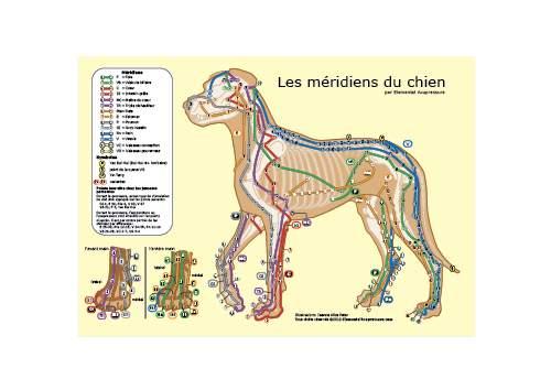 Les méridiens du chien 1