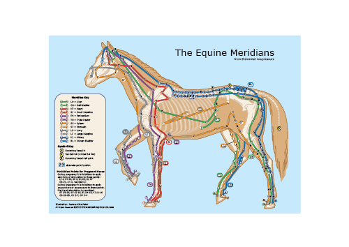 The Equine Meridians 1