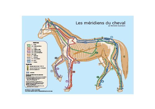 Les méridiens du cheval 1