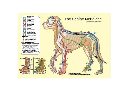 The Canine Meridians 1