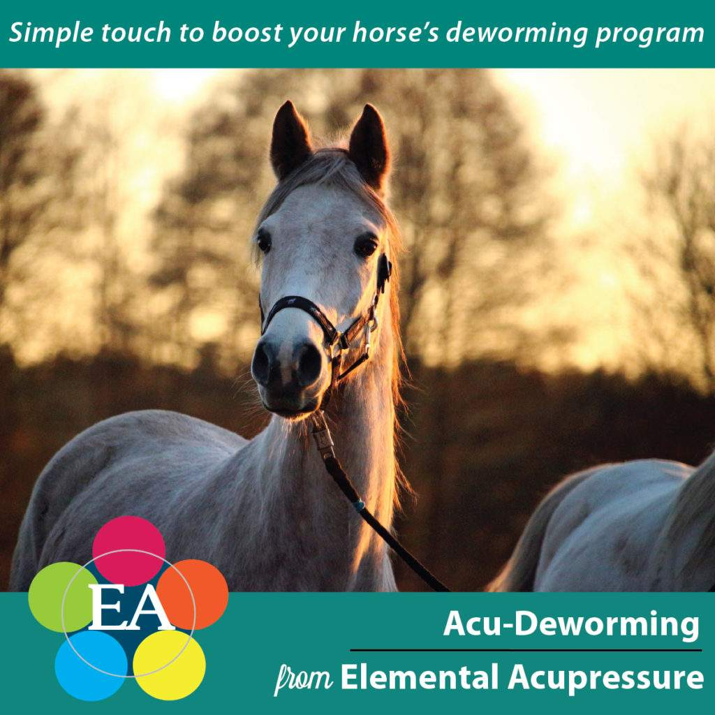 Acu-Deworming - Boost your horse's worming program with acupressure! 4