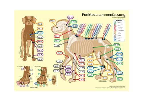 Punktezusammenfassung für Hunde 1