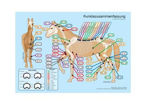 Punktezusammenfassung für Pferde 1