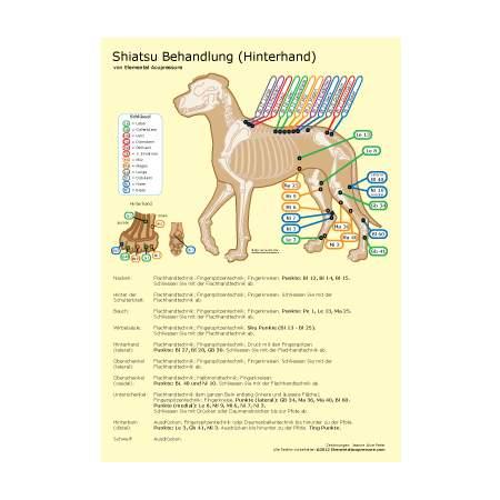Shiatsu-Routine für Hunde 1