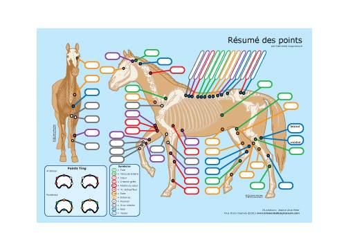 Acupressure pour chevaux: matériel didactique 1