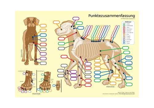 Hundeakupressur Lernhilfe 1