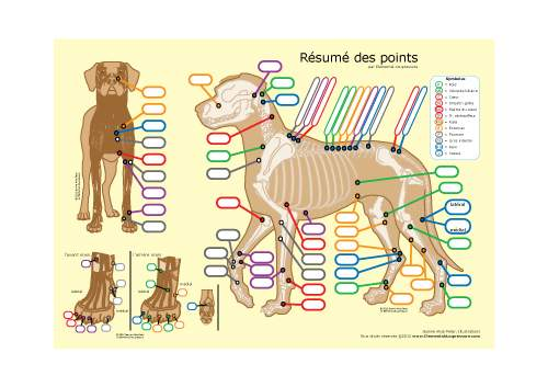 Acupressure pour chiens: matériel didactique 1