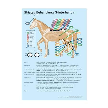 Shiatsu-Routine für Pferde 2