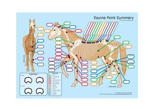 Equine Acupressure Study Aid 1