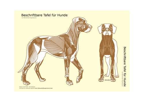 Beschriftbare Tafel, Ansicht der Hundemuskulatur 2