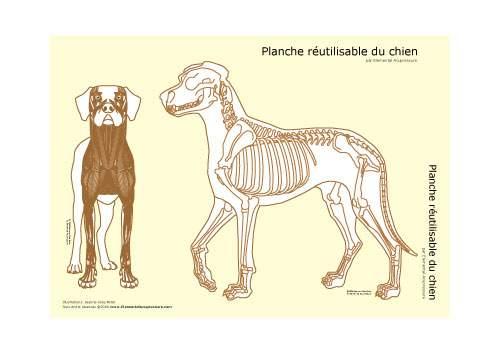 Planche réutilisable - squelette du chien 1