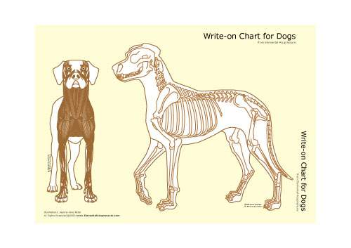 Write-on Chart for Dogs (skeletal view) 1